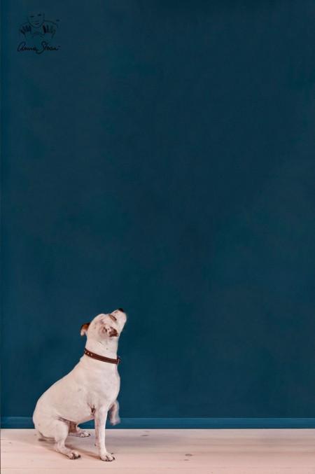 Aubusson-Style-Shot-896_wall_paint