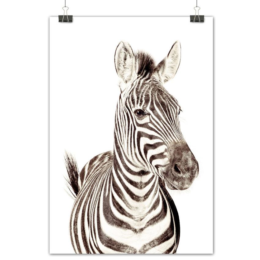 Zebra_poster_GrovvyMagnets_!