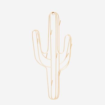 Obesalnik_kaktus_hanging_cactus