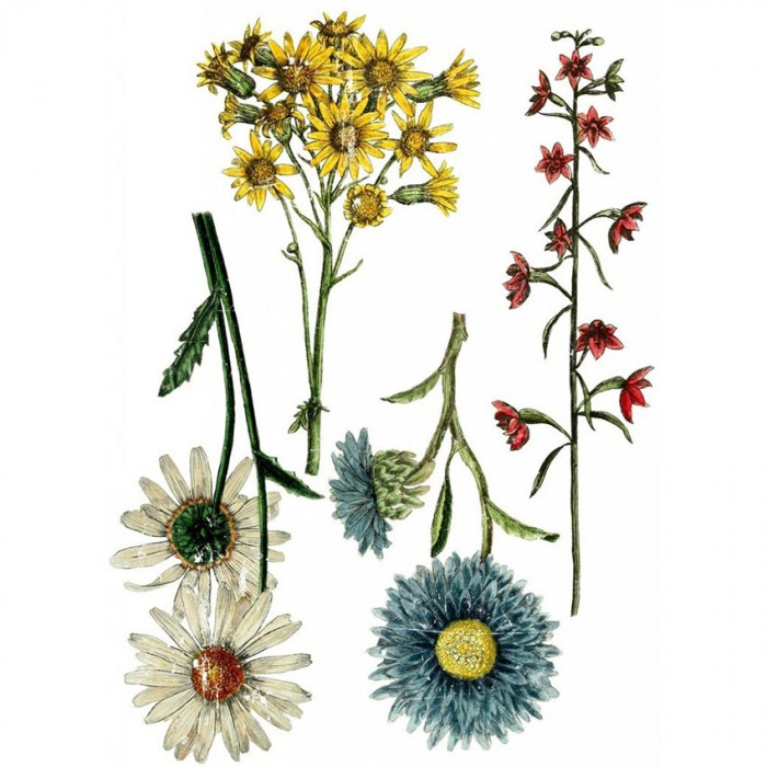 TRANSFER Wild Flower Botanicals